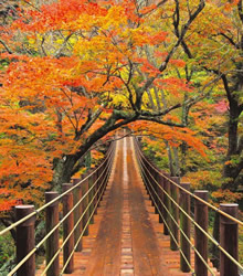 『6. 汐見滝吊り橋』の画像