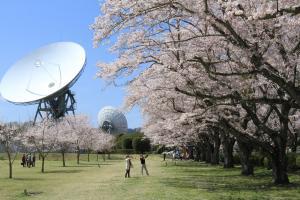 『さくら宇宙公園2【春・小】』の画像