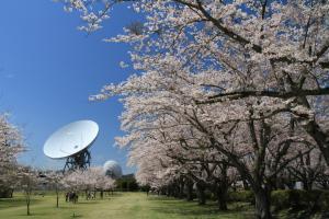 『さくら宇宙公園4【春・小】』の画像