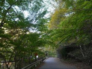 『11月6日 花貫渓谷の紅葉状況1』の画像