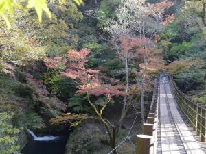 『『11月6日 花貫渓谷の紅葉状況2』の画像』の画像