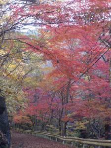 『11月16日現在の紅葉状況1』の画像
