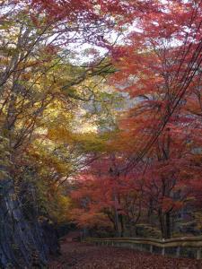 『『11月16日現在の紅葉状況2』の画像』の画像