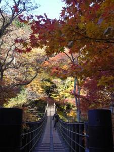 『11月16日現在の紅葉状況3』の画像