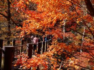 『11月18日現在の紅葉状況4』の画像