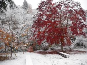 『『11月24日現在の紅葉状況2』の画像』の画像