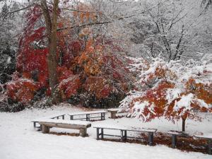 『11月24日現在の紅葉状況3』の画像