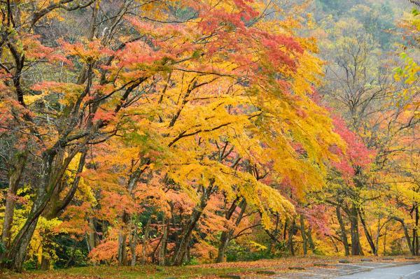 『花貫さくら公園紅葉1』の画像