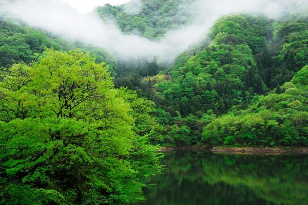 『花貫ダム新緑』の画像