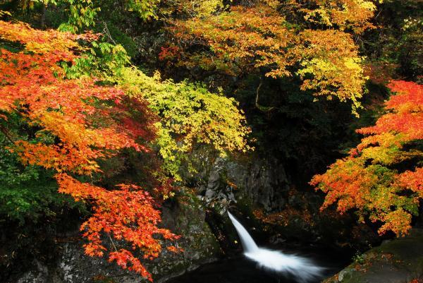 『花貫渓谷 紅葉2』の画像