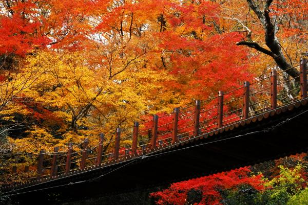 『花貫渓谷 紅葉3』の画像