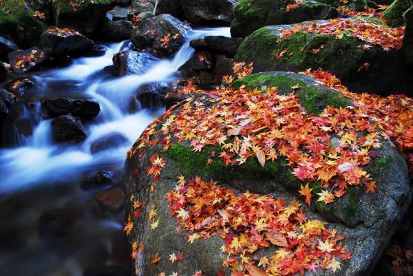 『花貫渓谷 紅葉5』の画像