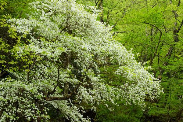 『小滝沢キャンプ場 写真1』の画像