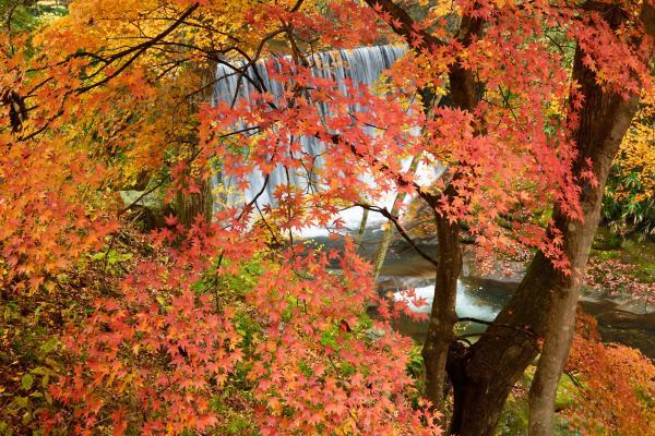『小滝沢キャンプ場 紅葉写真1』の画像