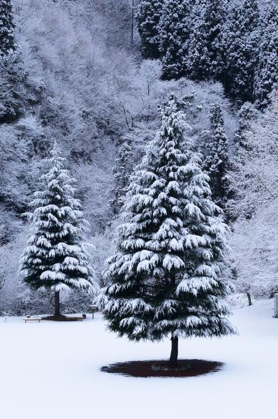 『花貫駐車場積雪1』の画像