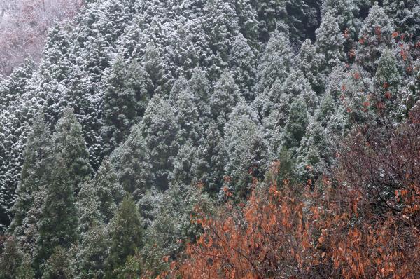 『花貫駐車場積雪2』の画像