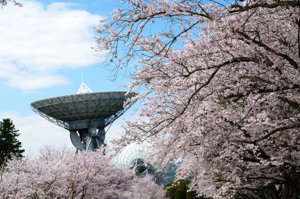 『宇宙公園さくら2』の画像