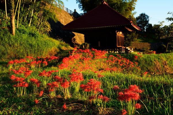 『長宏寺1』の画像