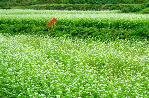 『水田』の画像