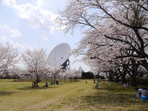 『4月15日さくら4』の画像